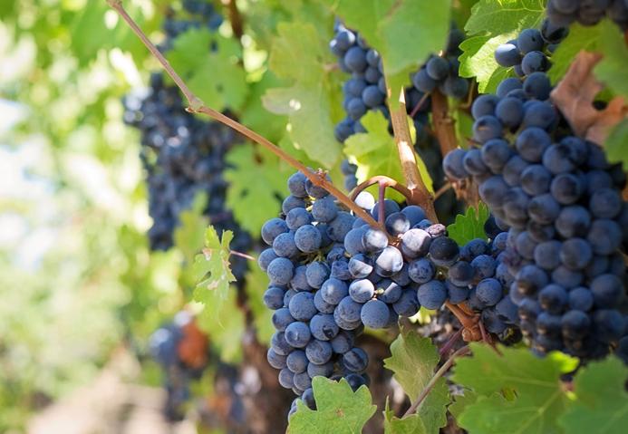 As lições do vinho para a construção de marca das empresas